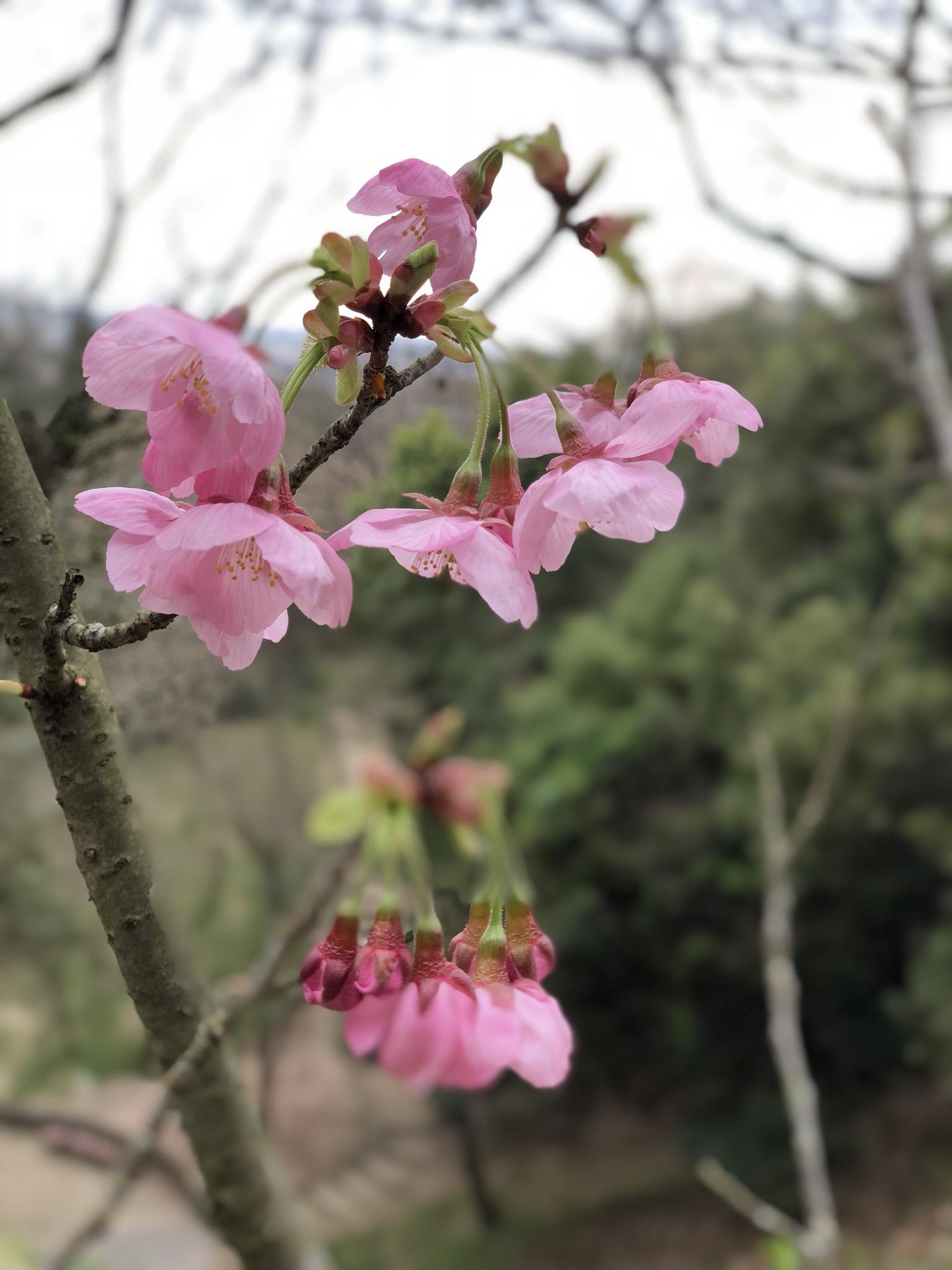 桜が美しい季節です♡
